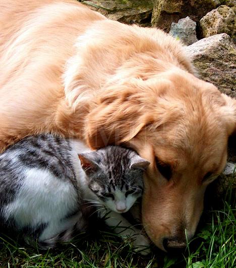 Kutyák és cicák által terjesztett betegségek                         A nyaralás ideje alatt sosem maradhat el a kutyusok és kiscicák simogatása és dédelgetése, de az ürülékükkel akár a játszótéren is találkozhat a gyerkőc. Ha olyan állatról van szó, melynek gazdája nem ismert, vagy nem tudjátok, megkapta-e a szükséges oltásokat, ne engedd, hogy a kicsi agyonszeretgesse, mert számos lenyeléssel, belélegzéssel és bőrön át terjedő fertőzést közvetíthetnek. A kis kedvencek leginkább bélféreg, kullancs és bőrbetegségek terjesztésére hajlamosak.