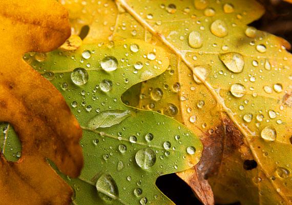 Esik eső, csepereg, sárga levél lepereg. Elcsendesült már az erdő, vége felé az esztendő.