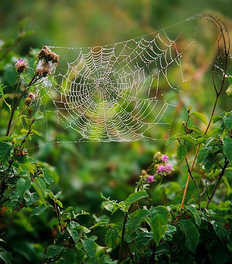 Pók vagy pókháló  Ha a gyerek fél a pókoktól és rémálmában gyakran megjelennek, talán csak arról van szó, hogy elalvás előtt az foglalkoztatja, nehogy az éj leple alatt az arcára ereszkedjen egy undok kis nyolclábú a plafonról. Természetes, hogy amitől fél, előbb-utóbb álomkép formájában is zaklatja. Ám a pók jelenléte behálózási, kisajátítási problémákról éppúgy árulkodhat. Ha imád téged a gyerek, de úgy érzi, túlságosan rátelepszel és visszatartod az önállósodásban, az anyától való túlzott függés úgy jelenhet meg az álmában, hogy beleragad egy pókhálóba, és nem tud kiszabadulni.