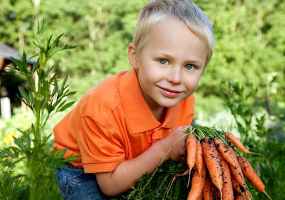 A sárgarépában fellelhető A-vitamin fontos szerepet játszik az immunrendszer működésében, de a szemnek és a bőrnek is jót tesz. Fogyasztható nyersen, de a kíméletes hőkezelés során is megőrzi vitamintartalma jó részét.