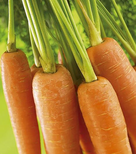 Sárgarépa  A sárgarépa rengeteg antioxidáns hatású béta-karotint tartalmaz, ezen kívül rostban gazdag, vagyis segít megelőzni a székrekedést. A szem- és bőrbetegségek kialakulása ellen is védelmet nyújthat csemetédnek.