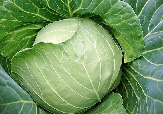 A káposztában található glutation az egyik legfontosabb antioxidáns, ami segít a méregtelenítésben, így a gyógyulási folyamatot is felgyorsítja.