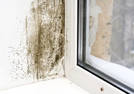 A párásabb helyiségekben, például a fürdőben főleg, de a szobákban is előfordul a sarkokban vagy az ablaknál penész. A penészgomba légzőszervi allergiát okozhat.