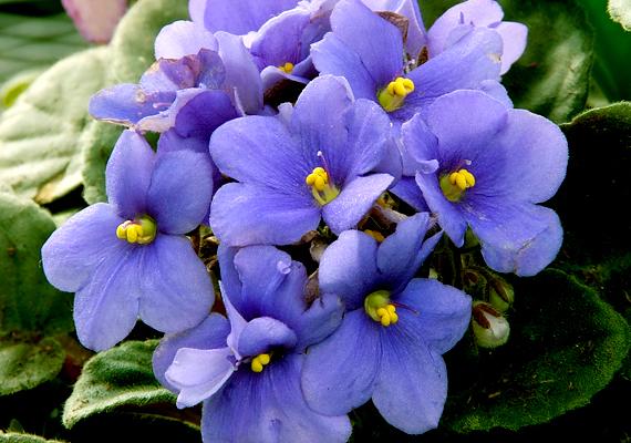 Egyes szobanövények pollenjei okozhatnak allergiát kicsiknél, nagyoknál.