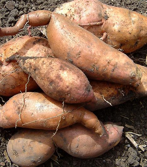 ÉdesburgonyaC-vitamint, folátot, rostokat és szénhidrátot tartalmaz. Keresd a sötétvöröses húsú változatot! Ez ugyanis koncentráltabban tartalmaz béta-karotint, ami gabonafélékkel együtt fogyasztva megkétszerezi a várandósság idején nélkülözhetetlen vas felszívódását.