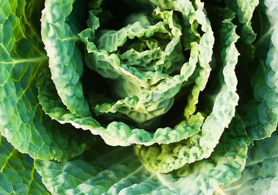 KelkáposztaKiváló kalciumforrás, és más mikrotápanyagokban is gazdag. Téli vitaminbomba. Nyers fogyasztása csaj zöld turmixban lehetséges. A legízletesebb kombináció a narancs-kelkáposzta párosítás.