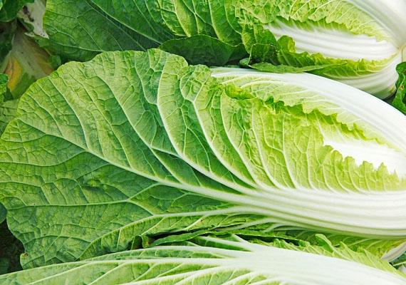 Kínai kelTélen a kínai kel csillapítja a zöldéhséget. Főzeléknek, salátába, de akár levesbetétnek vagy hús töltelékébe aprítva is finom. Könnyen fogyasztható, értékes, tápanyagokban gazdag zöld.