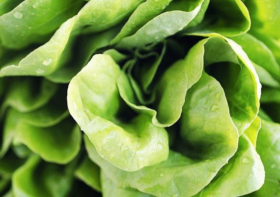 SalátaSalátát egész évben érdemes fogyasztani, hiszen számos fajtája kapható, például a fejes saláta vagy a jégsaláta. Zöld turmixba téve elbújik az íze, ha édes gyümölcsökkel csinálod. Így a gyerek is megissza.