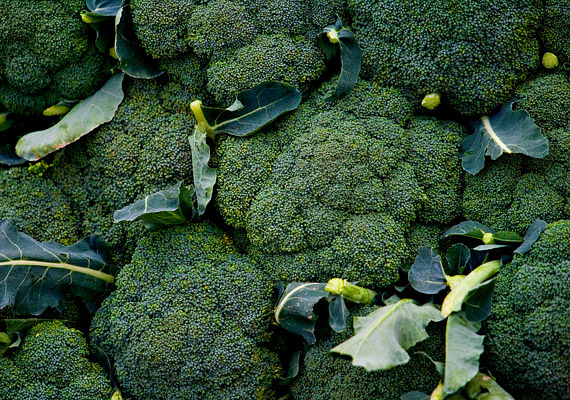 A brokkoli egész évben kapható, de ilyenkor a leggazdagabb vitaminokban és ásványi anyagokban, így az említett béta-karotinban is bővelkedik most.
