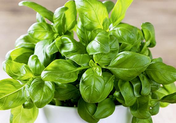 Fűszernövények                         A zöldfűszerek, mint a petrezselyem, a zellerlevél vagy a bazsalikom 7-8 hónapos kortól már adhatóak a piciknek, hogy változatosabb ízekhez szokjanak. Azonban semmiképp se fűszerezzük túl az ételeket, mert ez megterhelheti a babák emésztőrendszerét.