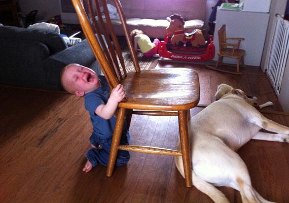 Útban volt a kutya, amikor a széket akarta eltolni.