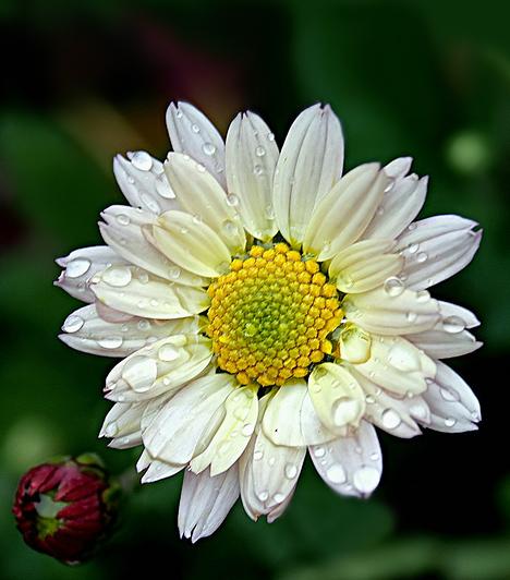 VirágBizonyos kerti növények, mint a krizantém vagy a muskátli is irritálhatják a gyerek bőrét, de ha porontyod a virágporra allergiás, elképzelhető, hogy a lakásban sem díszeleghet vágott virág.Kapcsolódó cikk:Természetes tippek allergia ellen »