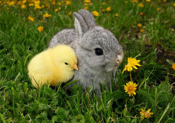 Erdőn-mezőn nyitott szemmelsok virágra lel az ember.Én most őket megöntözöm,Piros tojást megköszönöm.
