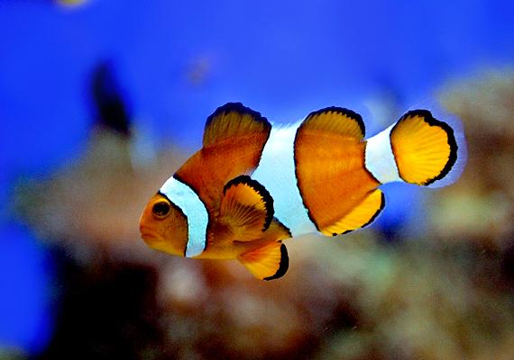 A halakat kedvelő gyerekek többnyire nyugodtak és megfontoltak. Valójában mindenről van véleményük, ám az ösztöneik helyett a megfigyeléseikre és tapasztalataikra támaszkodnak, és nem szívesen osztják meg akárkivel a gondolataikat.