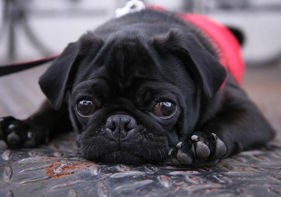 A kutya igazi társ: ha a gyereknek ez az állat a kedvence, akkor valószínűleg nagy a szeretetigénye, nyitott, és könnyen megbízik az emberekben, de igazán közel csak keveseket enged magához.