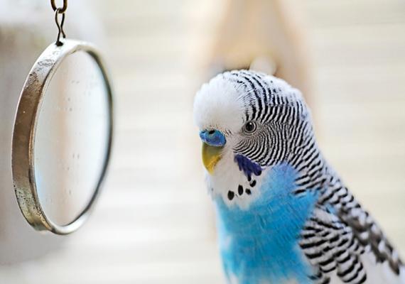 Amennyiben csemetéd a madarakat szerei a legjobban, valószínűleg művészi hajlamai vannak, melyeket azonban csak akkor tud kibontakoztatni, ha kellő teret és önállóságot adsz neki.