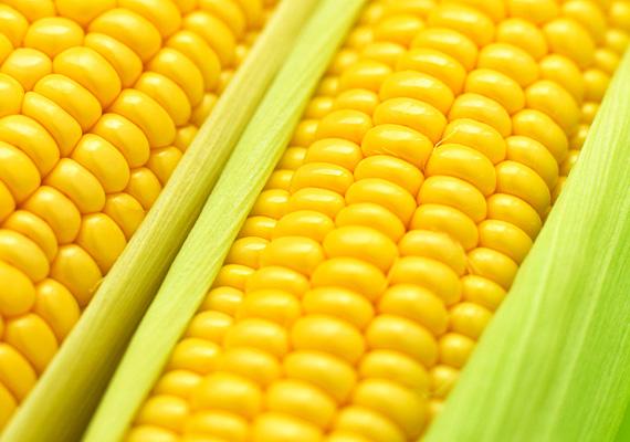 KukoricaA kukoricára mint ételre is lehet allergiás a gyerek, ez nyelv- és ajakduzzanattal, izomfájdalommal, nehéz légzéssel járhat. Pollenjei is okozhatnak ugyanakkor allergiát.