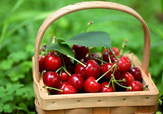 Május végén kezd pirosodni a cseresznye, és júniusban már meg is kóstoltathatod a gyerekkel az idei első szemeket. A cseresznye vértisztító hatású, A-, B- és C-vitamin-forrás.
