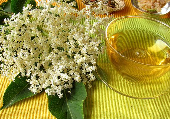 A bodzavirágból főzött tea jó fegyver az őszi megbetegedéssel szemben, de a megfázás gyógyításában is hatékony, mivel izzasztó hatása van.