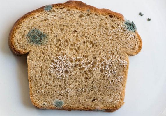 KenyérBár a képen látható kenyéren már jól láthatóak a penészedés jelei, a kis zöld foltok gombostűfej nagyságú pontokként kezdik, és eleinte nem könnyű őket észrevenni. A két-háromnapos kenyeret, főleg, ha zacskós kenyér, szagold meg, és fény felé tartva vedd szemügyre! A savanyú vagy állott szag már rossz jel, de az apró pöttyök jelenléte egyértelműen penészgombára utal, így az ilyen kenyeret már nem szabad megenni.A penész allergiás reakciót, hányást, légzési nehézséget okozhat.