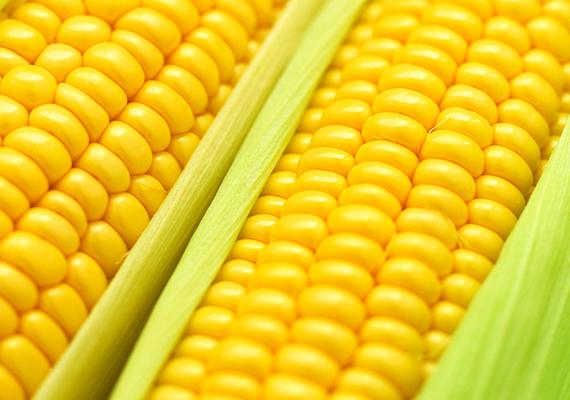 Kukorica                         Az élénksárga kukoricát szinte minden gyerek szereti, és érdemes is adni nekik, pláne a sulikezdés előtt, hiszen egyfelől szintén magas folsavtartalmú, másfelől foszfatidilszerin-tartalma révén javítja a memóriát és a koncentrálóképességet. Mindemellett B- és C-vitamin-tartalma is mellette szól.