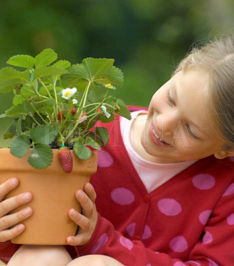 Szemléltető eszközök                         A biológialecke sokszor nagyon száraz, és inkább magolja, mintsem megérti a gyerek. Később aztán összekeverednek a fejében a külön-külön bemagolt dolgok, és nem tudja mihez kötni őket. Segíthetsz neki szemléltetőeszközökkel, például a ház körüli növényeken elemezhetitek a levelek erezetét, a szár és a virágzat felépítését.