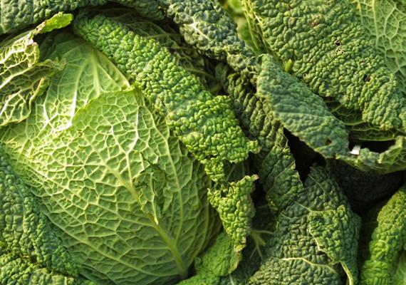 Táplálkozásodban kerüljenek előtérbe a magas vitamintartalommal bíró, egyszersmind harmonizáló hatású leveles zöldségek. Ha lehet, vegyszermentes gazdaságból szerezd be őket, de legalábbis a piacról, őstermelőktől. Ilyen például a kelkáposzta, amit párolhatsz vagy blansírozhatsz, de rakottasok alapanya is lehet.