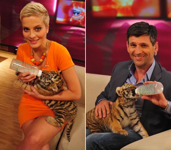 Tatár Csilla és Kárász Róbert az alig egy hónapos szibériai kistigriseket nagy örömmel etette.