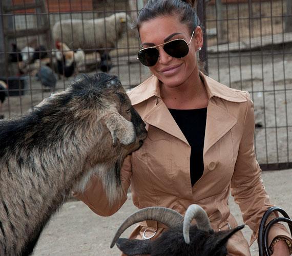 Niki összebarátkozott az állatotthon többi lakójával is: a kecske nagy érdeklődést tanúsított iránta.