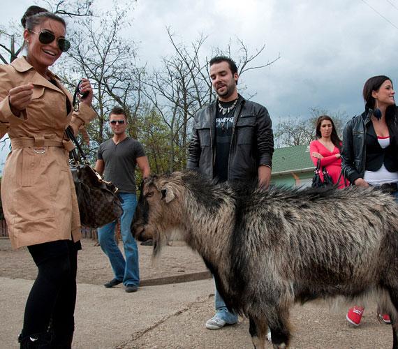 Pikulán kívül jelenleg közel 1000 állat él Budapest legnagyobb, majdnem 6 hektáron elterülő állatotthonában.