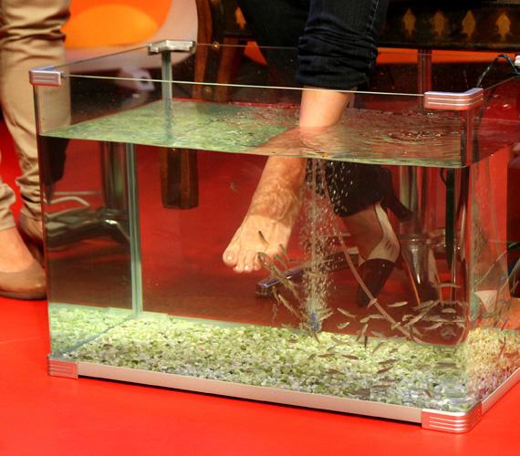 A halak egy hónapig karanténban vannak, mielőtt bevetnék őket gyógyászként, vizüket sterilizálják, egy-egy halcsapat csak egy hónapig van munkában.