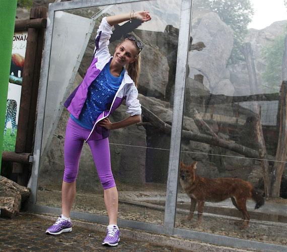 Az állatkerti rókák nem tudták mire vélni a szokatlan nyüzsgést.