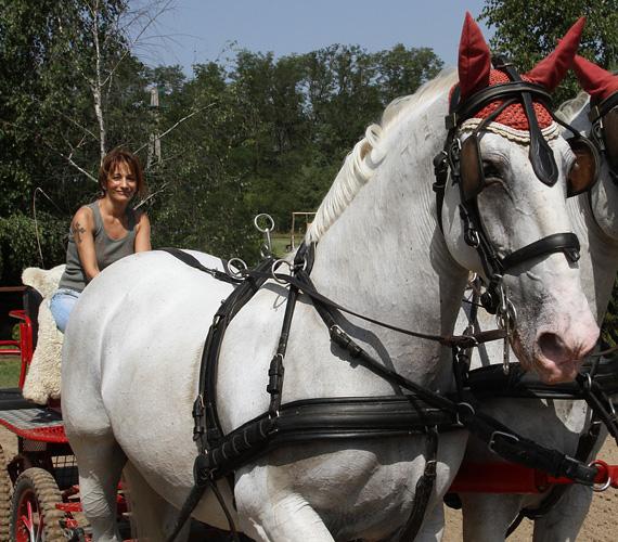 - A minap alkalmam volt életemben először kipróbálni a fogathajtást Domonyvölgyben, ami fantasztikus élménynek bizonyult. A lovak gyönyörűek voltak, a környezet pedig mesébe illő - áradozott a bevállalós mentor.