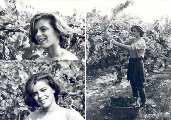 A fonyódi gimnáziumba járt, amelynek a diákjai gyakran mentek szüretelni a balatonboglári állami gazdaság szőlőjébe. Molnár Csillának királynőként sem derogált a munka, a szépségverseny utáni héten mosolyogva szüretelt.
