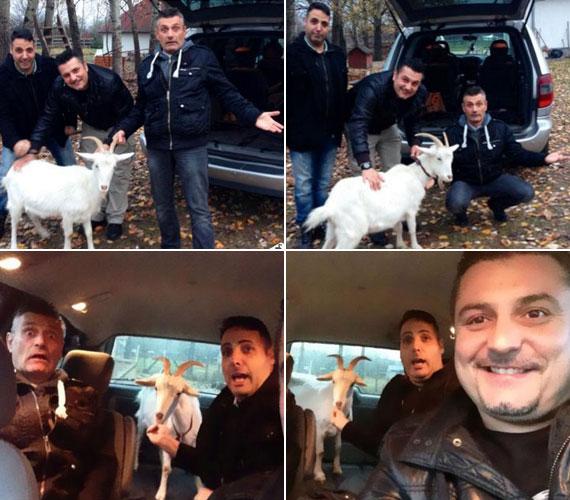 Sipos Peti és az Irigy Hónaljmirigy másik két tagja kecskére cserélte a fűnyírót - döntésüket hamar megbánták.