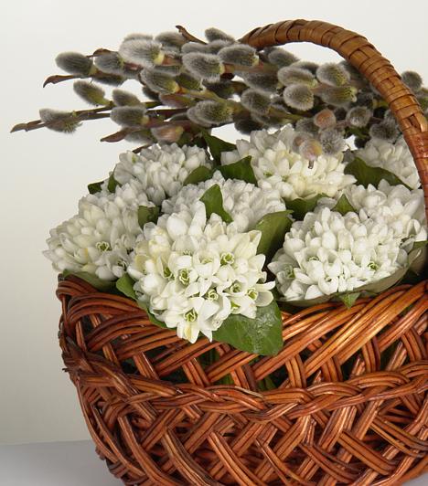 Selymes szépség  Nincs húsvét barka nélkül. A pihe-puha gömböcskékben végződő vessző igazán mutatós, ráadásul a többi virággal ellentétben még csak sok törődést sem igényel. Önmagában vázába állítva is ugyanolyan szép, mint más virágokkal csokorba fogva.