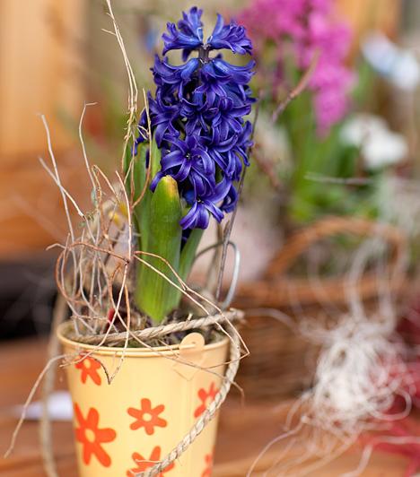 Illatozó jácint  A jácint erőteljes illata az egész lakást belengi, ezért érdemes többet is beszerezni a hagymás növényből, akár más-más színben is. Mivel csokorba kötni nem tudod, dobd fel a szép cserepes növényt színpompás kaspókkal.