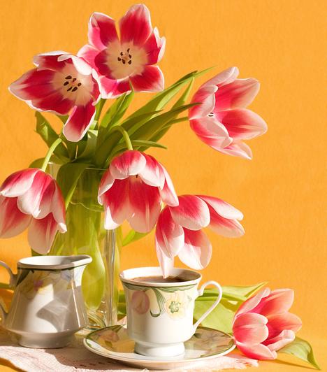 Cikornyás tulipán  Amikor a tulipán teljesen szétbontja szirmait, sokan fogják, és már meg is válnak tőle. Ne ess az ő hibájukba, hiszen a virág még így is meseszép, és például egy finom ágyba felszolgált reggelihez tökéletes dekoráció.