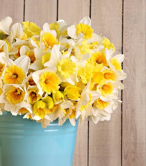 Napsárga nárciszok  A meseszépen sárgálló virág a húsvéti időszak nagy kedvence. Egyszerűségével bármelyik lakás éke lehet, hiszen letisztultságot és eleganciát sugároz. Ha szeretnéd kicsit feldboni az egyszerű csokrot, keresd elő a nagypapád régi fémvödrét, és állíts bele egy tucattal.