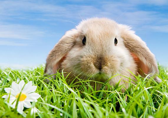 A jól ismert gyerekdalból ismert jelenet: nyuszi ül a fűben. Kattints ide a nagy felbontású képért!