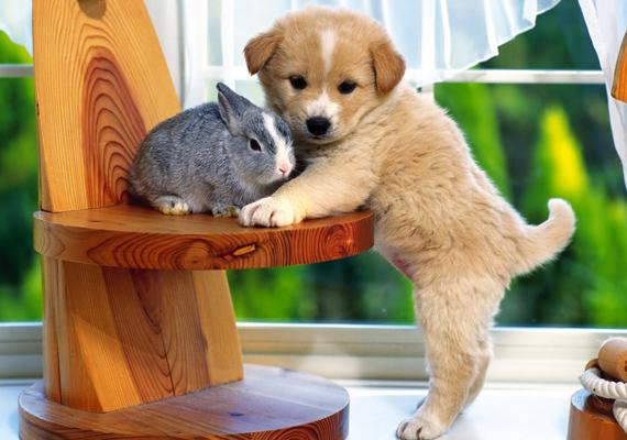 Egy jó barát mindig elkél. Kattints ide a nagy felbontású képért!