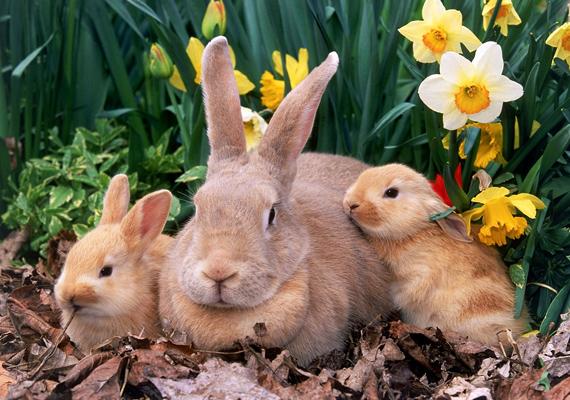 Ennek a bájos kis családnak lehetetlen ellenállni. Kattints ide a nagy felbontású képért!