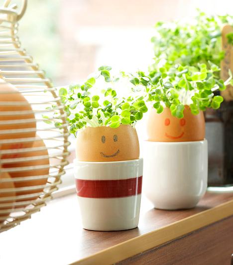 Tojásemberkék  A kitisztított és kiszárított tojáshéjba virágföldet is tölthetsz. Vess el benne néhány magot, rajzolj rá szemet és szájat, majd tojástartóban vagy kisebb kaspóban állítsd az ablakba. A tavaszi napsütés hatására hamarosan hajuk is lesz az apró tojásemberkéknek.