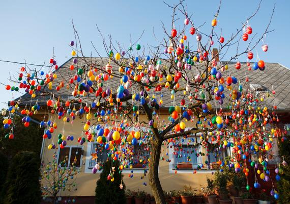A rengeteg húsvéti tojás révén tarkabarka látványt nyújt most a szilvafa.