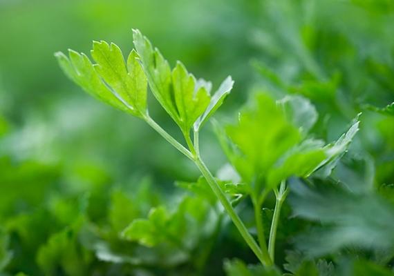 Tedd a petrezselymet kevés vízbe, majd forrald fel, hogy kijöjjön a zöldség színe, és meseszép zöld tojásokat festhess.
