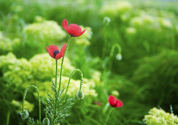 Virágzó, zöldellő mező, ha szereted a természet frissességét. A háttérkép letöltéséhez kattints ide!