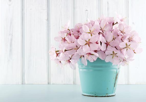 A cseresznyevirágokat nem lehet megunni. A háttérkép letöltéséhez kattints ide!