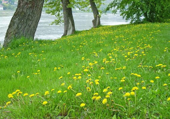 A Duna-partra bármikor le lehet sétálni, ha kirándulni vágynál. Az érintetlen területeken még vadvirágokkal is találkozhatsz.
