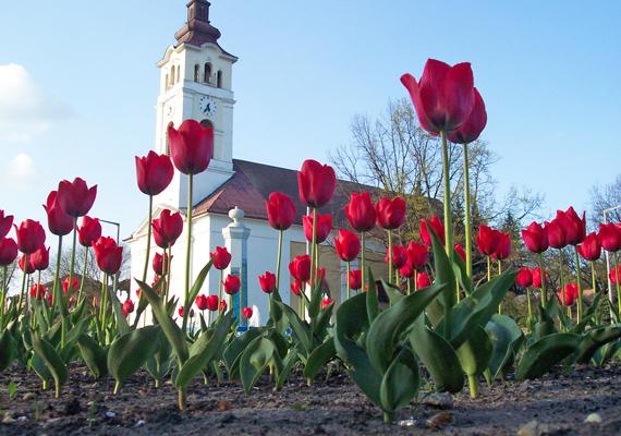 A kisteleki római katolikus templom lábánál rengeteg piros tulipán nyílik. Érdemes egy nagyobb sétát tenni itt, a kisvárosi hangulat magával ragadó.