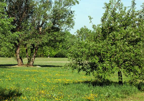 Így fest a Vác, a Ligeti-tó és a Duna hármasa által közrezárt virágos mező. Egy jó kis piknikezés a gyermekláncfűtől sárgálló réten remek programnak ígérkezik.